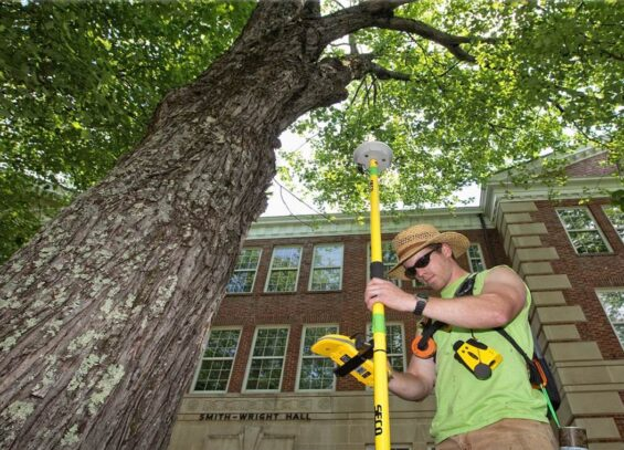 Arborist Consultations-Hallandale Beach FL Tree Trimming and Stump Grinding Services-We Offer Tree Trimming Services, Tree Removal, Tree Pruning, Tree Cutting, Residential and Commercial Tree Trimming Services, Storm Damage, Emergency Tree Removal, Land Clearing, Tree Companies, Tree Care Service, Stump Grinding, and we're the Best Tree Trimming Company Near You Guaranteed!