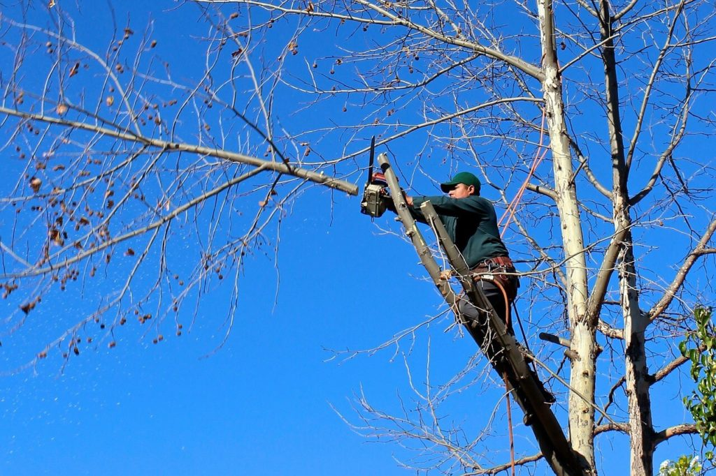 Contact Us-Hallandale Beach FL Tree Trimming and Stump Grinding Services-We Offer Tree Trimming Services, Tree Removal, Tree Pruning, Tree Cutting, Residential and Commercial Tree Trimming Services, Storm Damage, Emergency Tree Removal, Land Clearing, Tree Companies, Tree Care Service, Stump Grinding, and we're the Best Tree Trimming Company Near You Guaranteed!