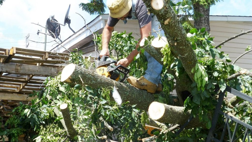 Hallandale Beach FL Tree Trimming and Stump Grinding Services Home Page Image-We Offer Tree Trimming Services, Tree Removal, Tree Pruning, Tree Cutting, Residential and Commercial Tree Trimming Services, Storm Damage, Emergency Tree Removal, Land Clearing, Tree Companies, Tree Care Service, Stump Grinding, and we're the Best Tree Trimming Company Near You Guaranteed!