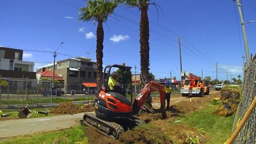 Palm Tree Removal-Hallandale Beach FL Tree Trimming and Stump Grinding Services-We Offer Tree Trimming Services, Tree Removal, Tree Pruning, Tree Cutting, Residential and Commercial Tree Trimming Services, Storm Damage, Emergency Tree Removal, Land Clearing, Tree Companies, Tree Care Service, Stump Grinding, and we're the Best Tree Trimming Company Near You Guaranteed!