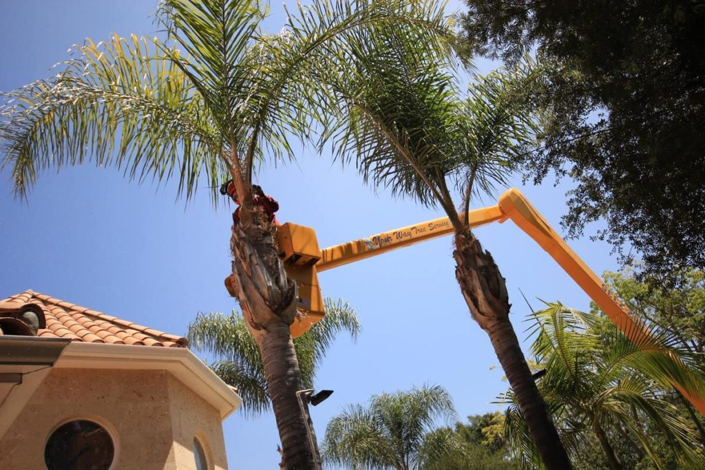 Palm Tree Trimming-Hallandale Beach FL Tree Trimming and Stump Grinding Services-We Offer Tree Trimming Services, Tree Removal, Tree Pruning, Tree Cutting, Residential and Commercial Tree Trimming Services, Storm Damage, Emergency Tree Removal, Land Clearing, Tree Companies, Tree Care Service, Stump Grinding, and we're the Best Tree Trimming Company Near You Guaranteed!