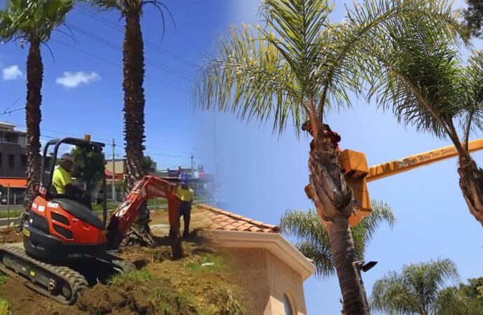 Palm tree trimming & palm tree removal-Hallandale Beach FL Tree Trimming and Stump Grinding Services-We Offer Tree Trimming Services, Tree Removal, Tree Pruning, Tree Cutting, Residential and Commercial Tree Trimming Services, Storm Damage, Emergency Tree Removal, Land Clearing, Tree Companies, Tree Care Service, Stump Grinding, and we're the Best Tree Trimming Company Near You Guaranteed!