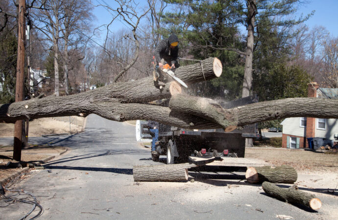 Residential Tree Services-Hallandale Beach FL Tree Trimming and Stump Grinding Services-We Offer Tree Trimming Services, Tree Removal, Tree Pruning, Tree Cutting, Residential and Commercial Tree Trimming Services, Storm Damage, Emergency Tree Removal, Land Clearing, Tree Companies, Tree Care Service, Stump Grinding, and we're the Best Tree Trimming Company Near You Guaranteed!