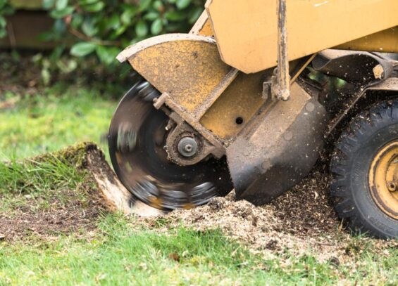 Stump Grinding-Hallandale Beach FL Tree Trimming and Stump Grinding Services-We Offer Tree Trimming Services, Tree Removal, Tree Pruning, Tree Cutting, Residential and Commercial Tree Trimming Services, Storm Damage, Emergency Tree Removal, Land Clearing, Tree Companies, Tree Care Service, Stump Grinding, and we're the Best Tree Trimming Company Near You Guaranteed!