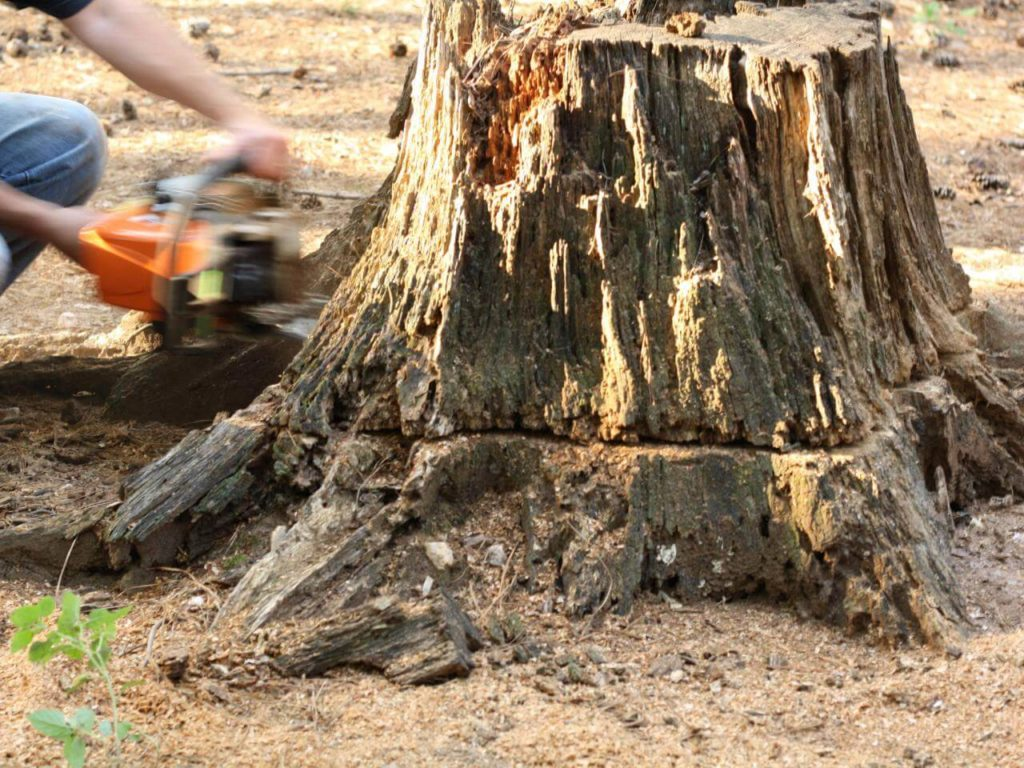 Stump Removal-Hallandale Beach FL Tree Trimming and Stump Grinding Services-We Offer Tree Trimming Services, Tree Removal, Tree Pruning, Tree Cutting, Residential and Commercial Tree Trimming Services, Storm Damage, Emergency Tree Removal, Land Clearing, Tree Companies, Tree Care Service, Stump Grinding, and we're the Best Tree Trimming Company Near You Guaranteed!