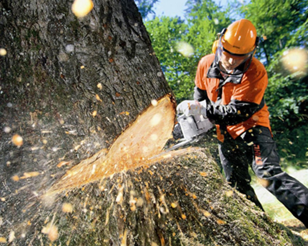 Tree Cutting-Hallandale Beach FL Tree Trimming and Stump Grinding Services-We Offer Tree Trimming Services, Tree Removal, Tree Pruning, Tree Cutting, Residential and Commercial Tree Trimming Services, Storm Damage, Emergency Tree Removal, Land Clearing, Tree Companies, Tree Care Service, Stump Grinding, and we're the Best Tree Trimming Company Near You Guaranteed!