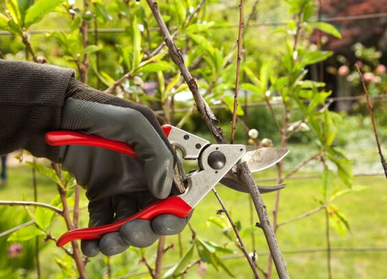 Tree Pruning-Hallandale Beach FL Tree Trimming and Stump Grinding Services-We Offer Tree Trimming Services, Tree Removal, Tree Pruning, Tree Cutting, Residential and Commercial Tree Trimming Services, Storm Damage, Emergency Tree Removal, Land Clearing, Tree Companies, Tree Care Service, Stump Grinding, and we're the Best Tree Trimming Company Near You Guaranteed!