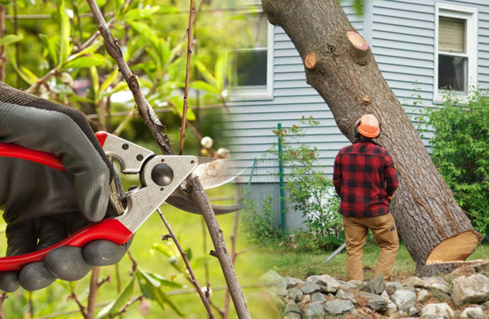 Tree pruning & tree removal-Hallandale Beach FL Tree Trimming and Stump Grinding Services-We Offer Tree Trimming Services, Tree Removal, Tree Pruning, Tree Cutting, Residential and Commercial Tree Trimming Services, Storm Damage, Emergency Tree Removal, Land Clearing, Tree Companies, Tree Care Service, Stump Grinding, and we're the Best Tree Trimming Company Near You Guaranteed!